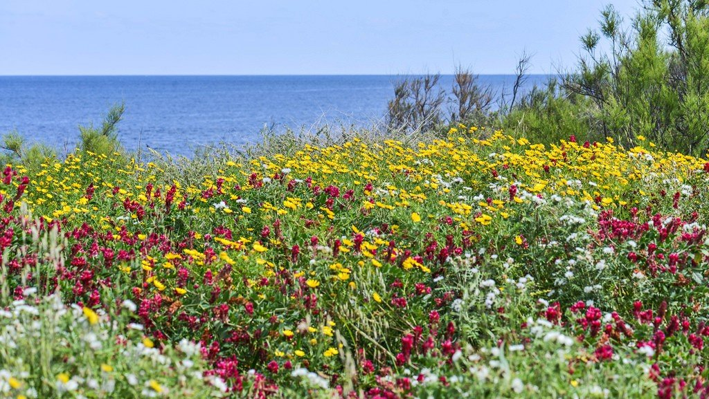 Spring in Malta flowers by the sea